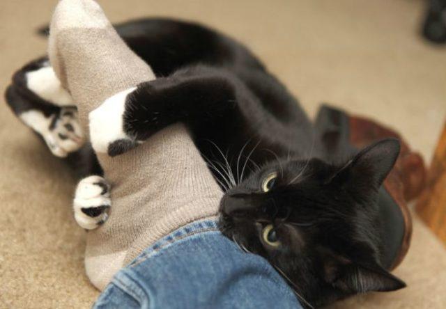 Кот трется о ноги