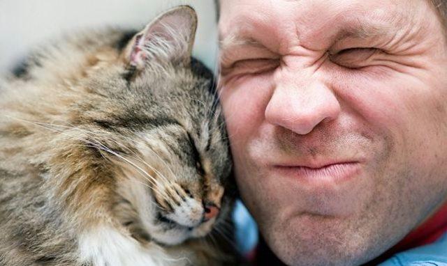 Любовь кошки