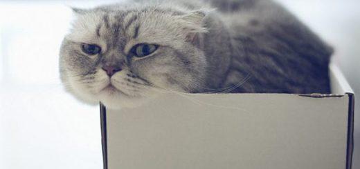Почему кошки любят тесные коробки и корзинки