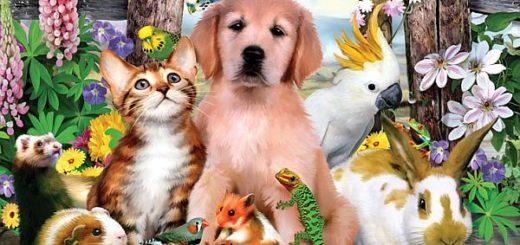 ТОП-20 удивительных фактов о животных