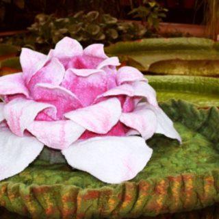 Кувшинки Виктория регия имеют диаметр до трех метров и выдерживают вес до 30 кг