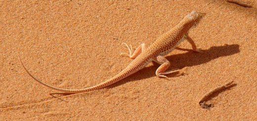 В мексиканской пустыне пропадают радиосигналы и встречаются необычные существа