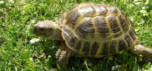 Черепахи первыми облетели Луну на советском беспилотнике