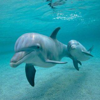 Дельфины спят каждым полушарием по очереди
