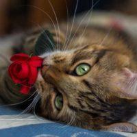 Признаки любви кошки к человеку