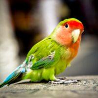 Интересные факты о попугаях, образ жизни, виды, питание, размножение, разведение