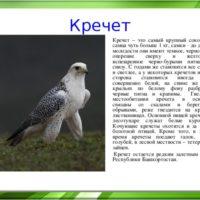 Интересные факты о кречетах, среда обитания, виды, питание, размножение