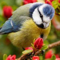 Интересные факты о птицах, описание, строение, виды, места обитания, питание, размножение