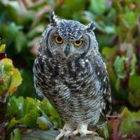 Интересные факты о совах, образ жизни, виды, питание, размножение