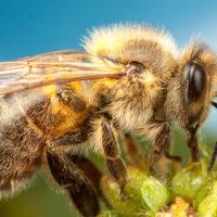 Интересные факты о насекомых: бабочка, богомол, божья коровка, комар и другие насекомые