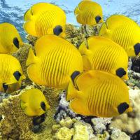 Интересные факты о рыбах, особенности, образ жизни, влияние на природу
