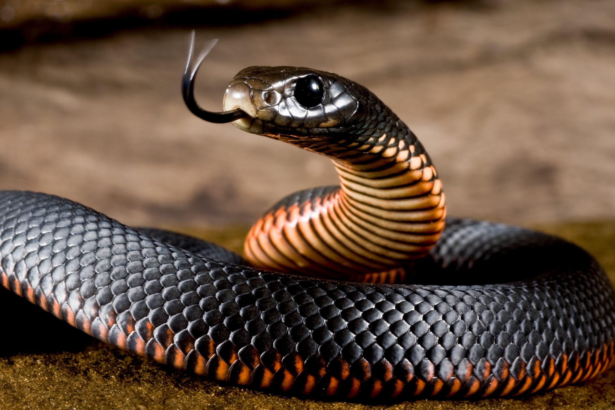 Интересные факты о змеях, распространение, образ жизни, размножение