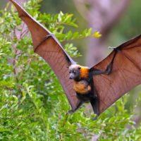 Интересные факты о летучих мышах, особенности, питание, польза для экосистемы