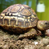 Интересные факты о черепахах, виды, образ жизни, влияние на природу