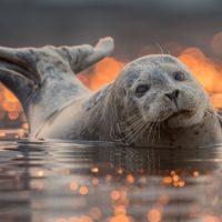 Интересные факты о тюленях, описание, образ жизни, влияние на природу