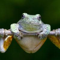 Интересные факты о лягушках, видовое разнообразие, среда обитания и польза для экосистемы