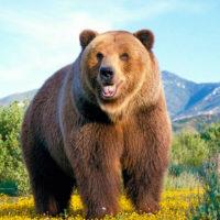Интересные факты о медведях, характеристика, виды, питание